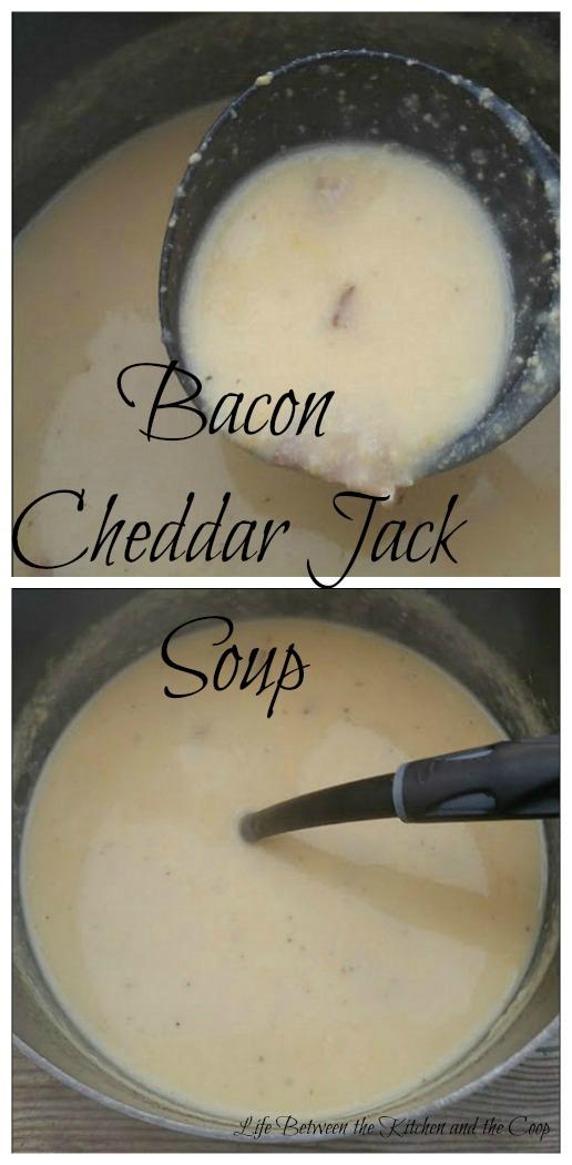 cheese, cheesy, monterey jack, bacon