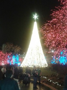 WM Christmas Tree and lights Temple Square
