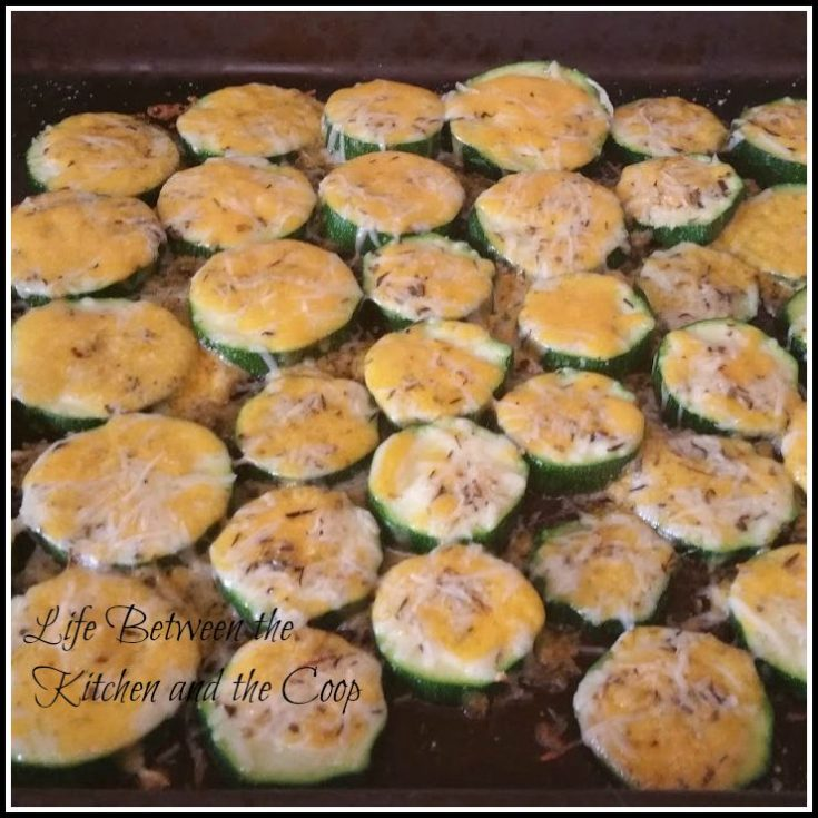 These savory seasoned zucchini bites make the perfect appetizer or side dish!