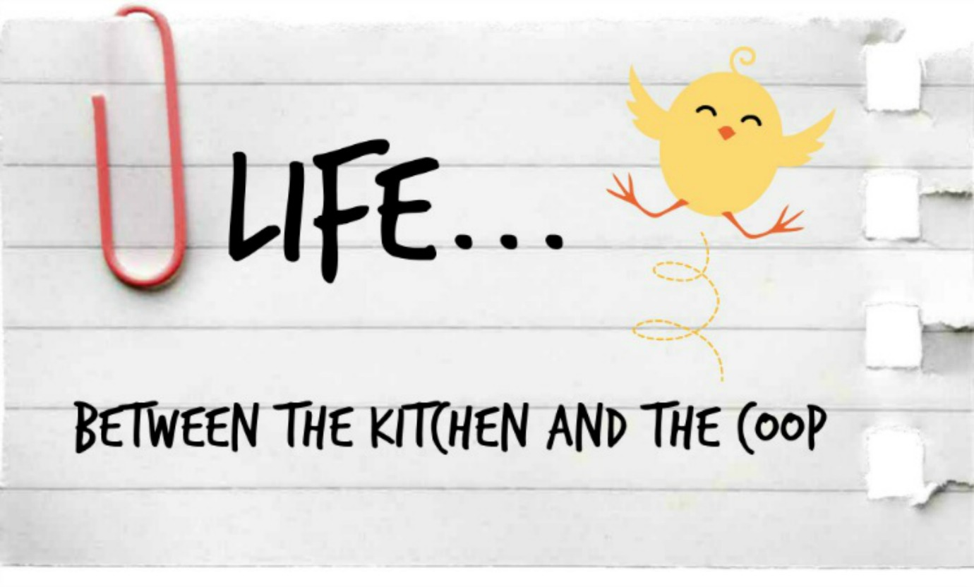 Life Between the Kitchen and the Coop
