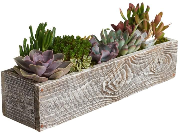 Rectangular Succulent Garden