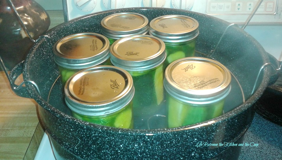 Hot Water Canning Pickles, Cucumbers Grown in Garden