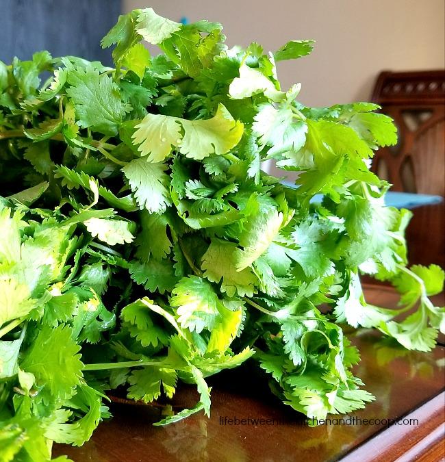 preserve cilantro