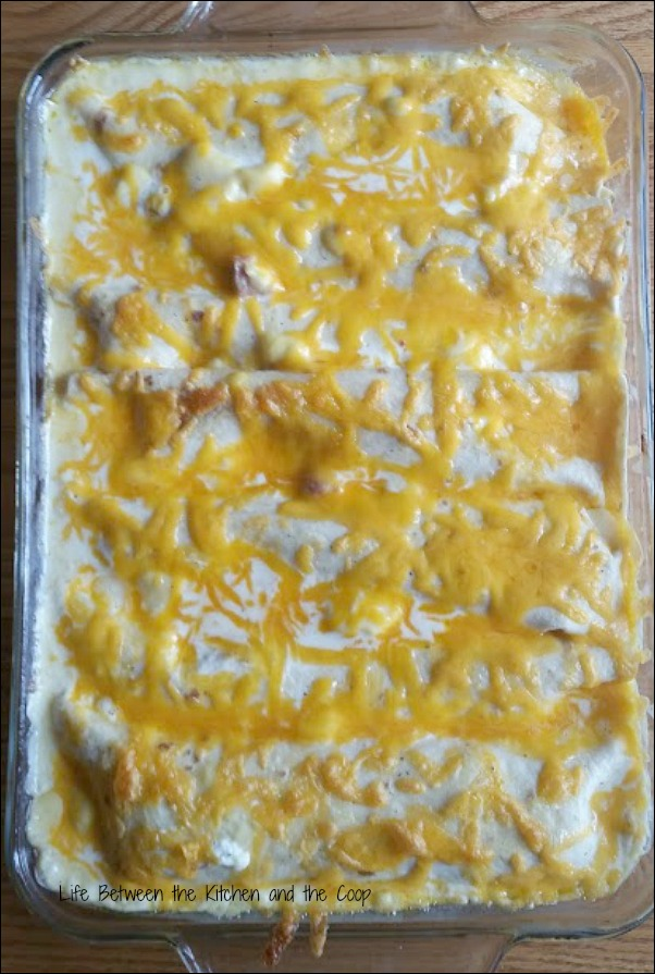 Mexican food, cheesy, tortilla