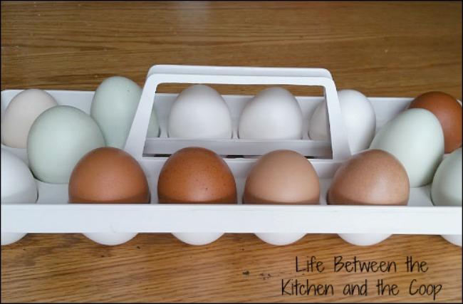 backyard chicken eggs, organic eggs, emergency preparedness