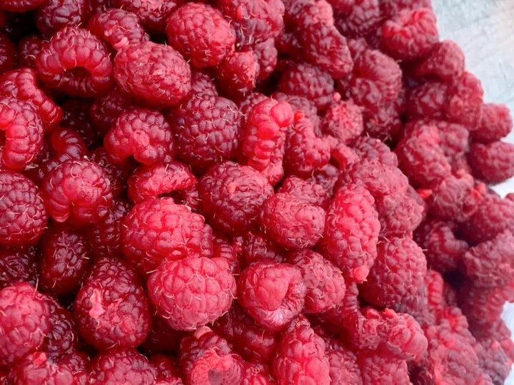 dehydrating fresh raspberries for food storage