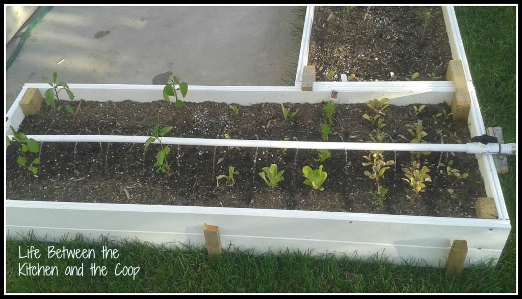 garden watering tool, garden watering, garden, gardening