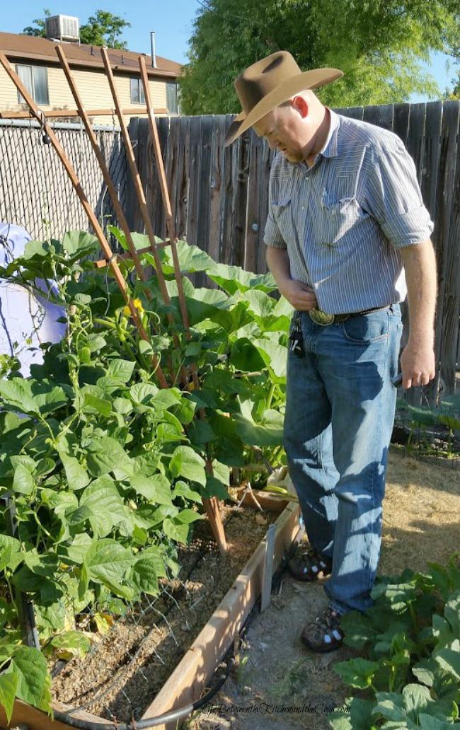 grow green beans