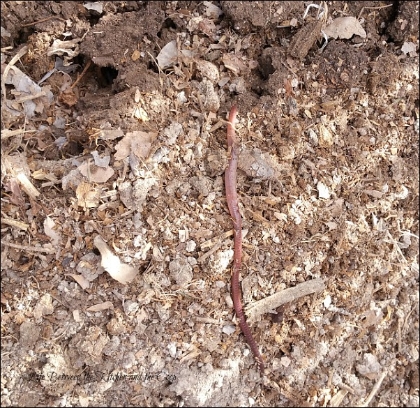 transplant starter plants