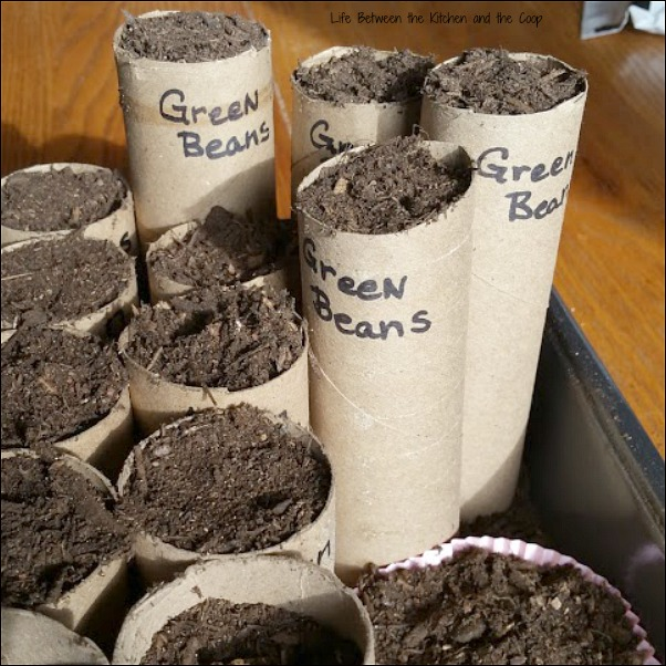 cheap way to grow seeds