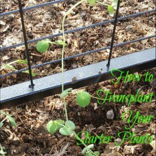 garden, gardening, garden trellis, plant from seed, starter plants