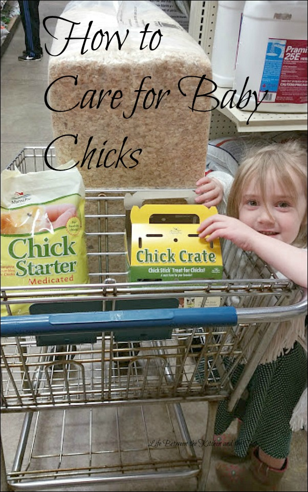 baby chicks on urban homestead, homesteading, backyard farming