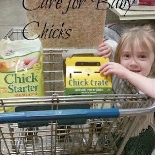 Getting Baby Chicks, Urban Homesteading, Backyard Farm,