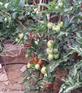 garden, plan a garden, gardening